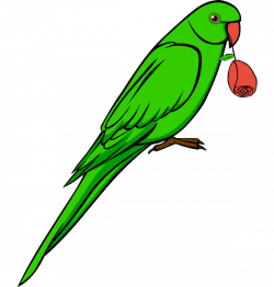 Budgie clipart parrot bird