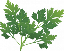 Herbs And Spices clipart oregano