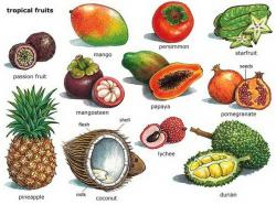 Mango clipart tropical fruit