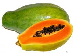 Pawpaw clipart jackfruit