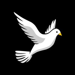 Peace Dove clipart kabootar