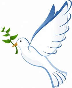 Peace Dove clipart olive branch