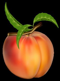 Fig clipart peach tree