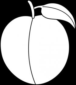 Nectarine clipart black and white