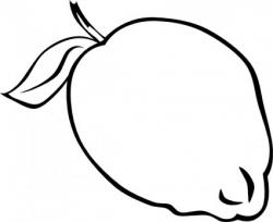 Coconut clipart black and white