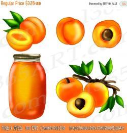 Apricot clipart peach fruit