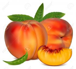 Peach clipart peach slice