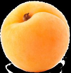 Apricot clipart fruit