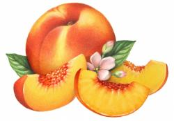 Peach clipart transparent