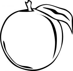 Peach clipart vector