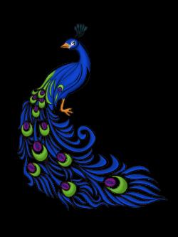 Drawn peafowl graphic design
