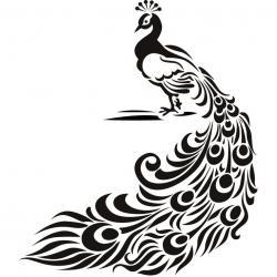 Drawn peafowl free hand drawing