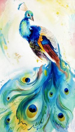 Drawn peafowl peacock tail