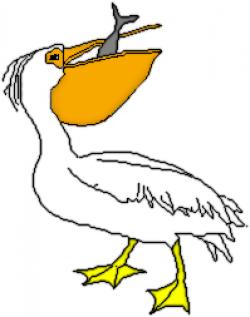 Pelican clipart bird