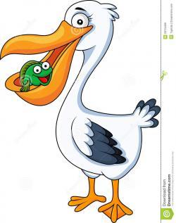 Pelican clipart cute