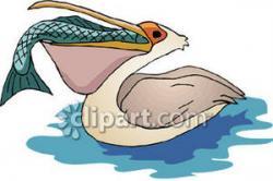 Pelican clipart fish
