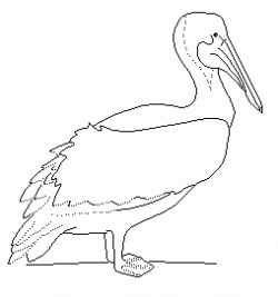 Pelican clipart sea bird