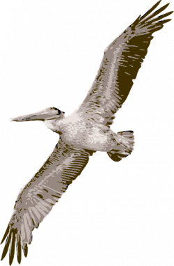 Pelican clipart wings