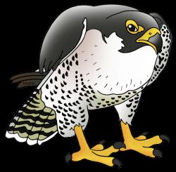 Peregrine Falcon clipart