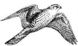 Medieval clipart bird