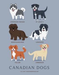 Perro clipart doggy
