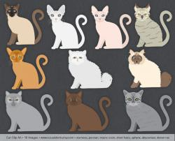 Sphynx Cat clipart ragdoll cat