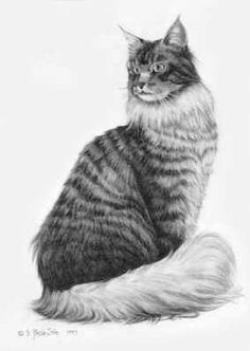 Maine Coon clipart realistic cat
