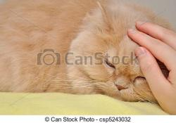 Cat clipart touch