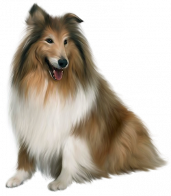 Collie clipart real dog
