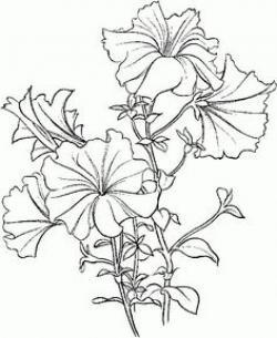 Petunia clipart august flower