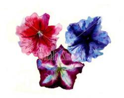 Petunia clipart blue