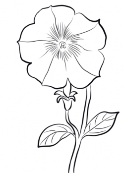 Petunia clipart flower coloring