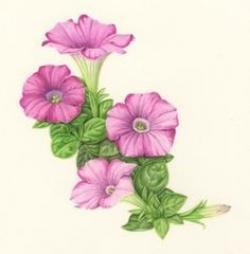 Petunia clipart three flower