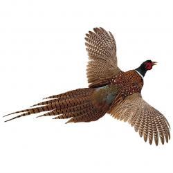 Pheasant clipart flight