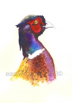 Pheasant clipart head