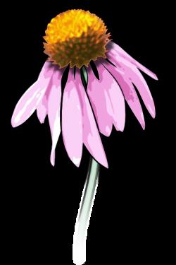 Gerbera clipart wild flower