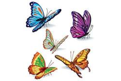 Photoshop clipart beautiful butterfly