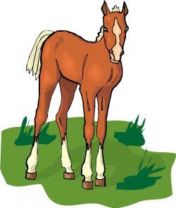 Foal clipart head