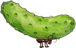 Pickles clipart dill pickle