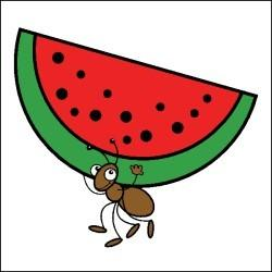 Watermelon clipart ant