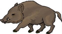 Warthog clipart hog