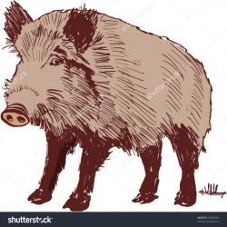Boar clipart wild boar