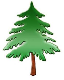 Fir Tree clipart tress