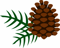 Corn clipart pine