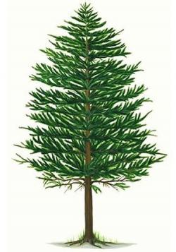 Timber clipart tree stem