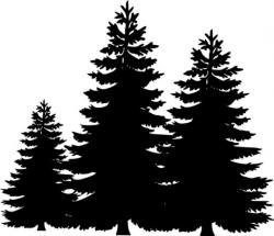 Shaow clipart pine tree