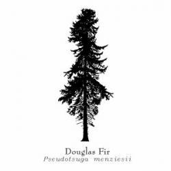 Drawn fir tree blender