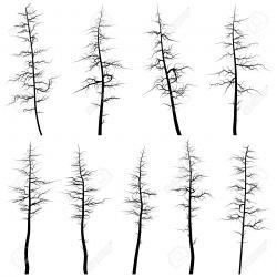 Dead Tree clipart pine tree