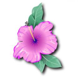 Tropics clipart pretty flower