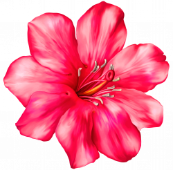Exotic clipart tropical flower